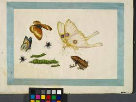 "Butterflies and insects from a portfolio of paintings on ""rice paper"""