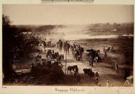 Baggage elephants from photograph album of Views of India