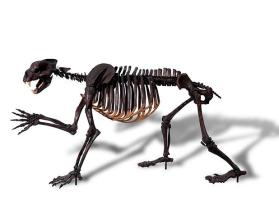 Fossil bear skeleton