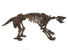 Fossil giant ground sloth skeleton