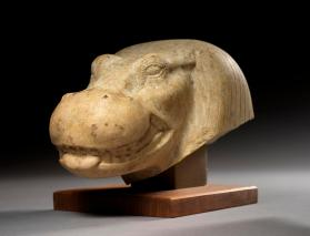 Hippopotamus head