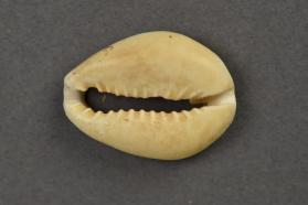 Bead, cowrie shell