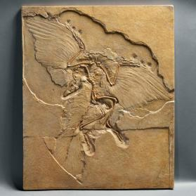 Fossil bird skeleton