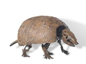 Fossil giant armadillo skeleton