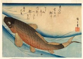 Carp, from a series of Fish Subjects