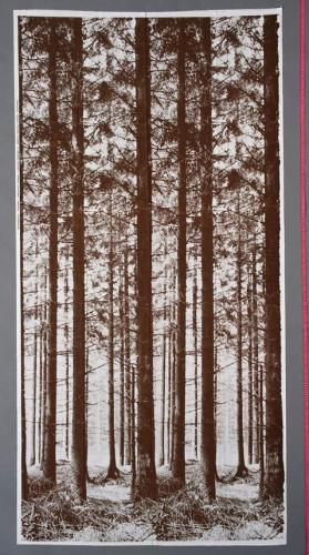 Pinewood photo curtain